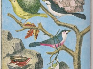 Ruth Marten Brave Birds (2011), Watercolor and Gouache on 18th Century Print, 33,6 x 20,7 cm